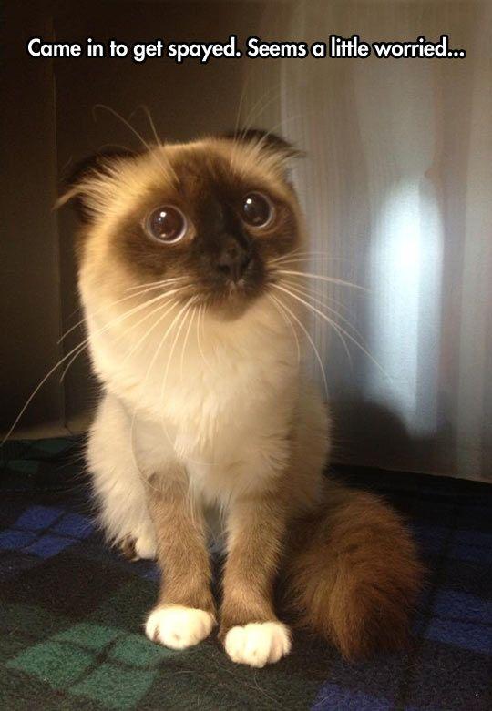 funny cat big eyes face