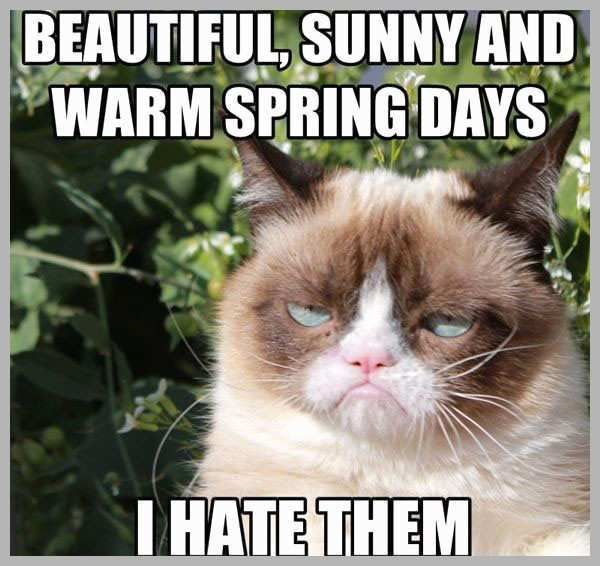 Funny Hot Weather Memes Admirably Grumpy Cat Still Grumpy Funny Hot Weather Memes Unique You