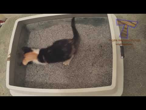 SUPER WEIRD CATS Extremely FUNNY CAT VIDEOS pilation