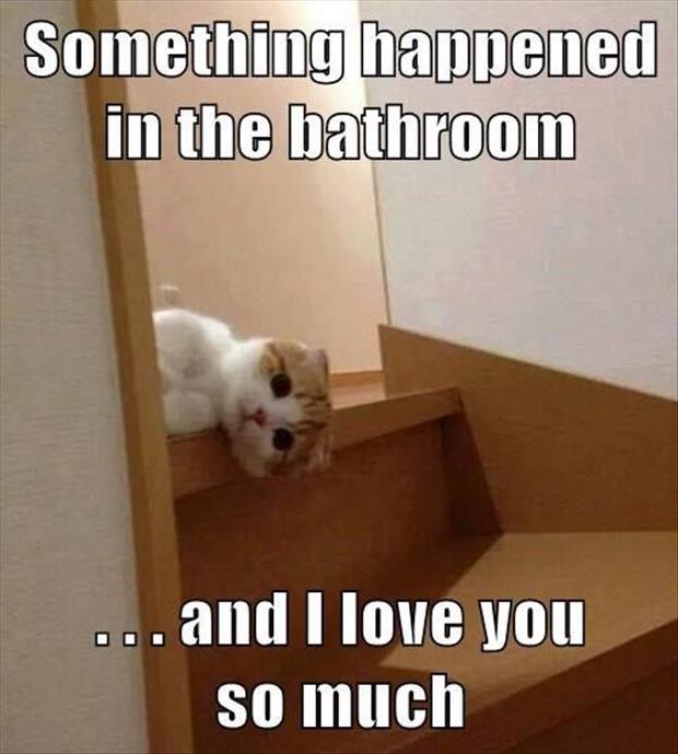 Top 30 Funny Cat Memes Humorous