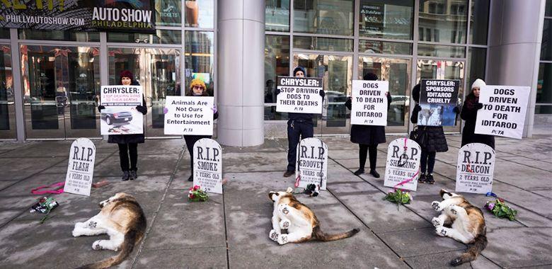 A Dog Graveyard Haunts Chrysler Over Deadly Iditarod Sponsorship
