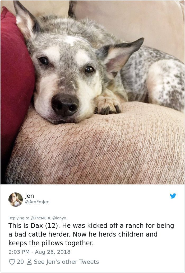 25 Dogs That Were Bred For e Job ly Succeeding In Doing Everything But That