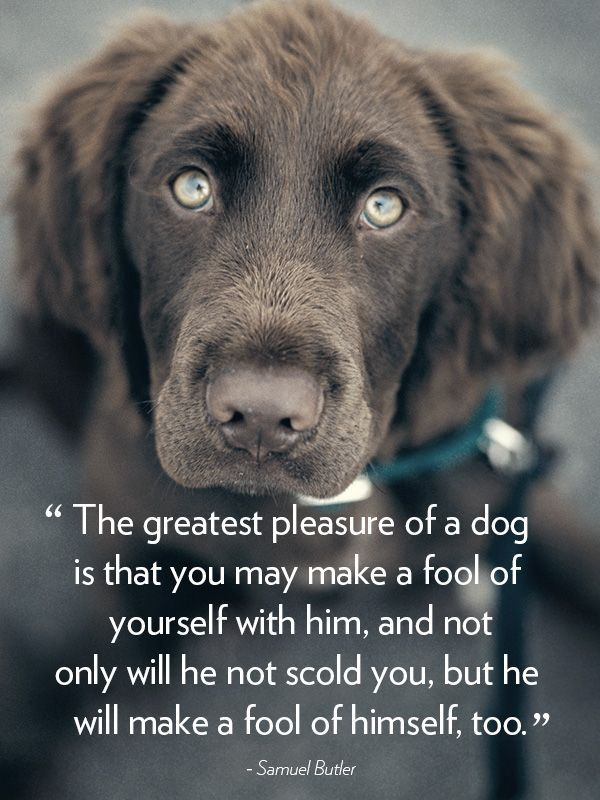 30 Dog Quotes That Will Melt Your Heart All About Dogs Pinterest