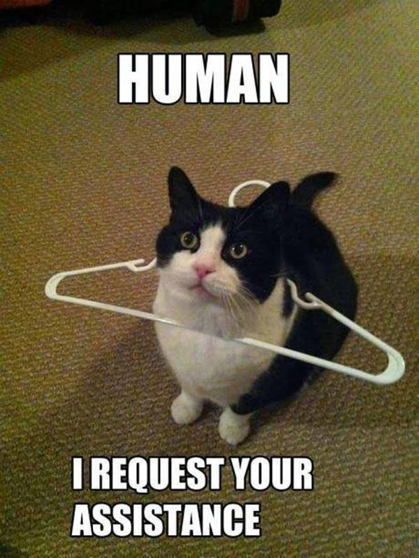 """munity Post 22 Conversations Every Cat Owner Has Had With Their Pet """""""