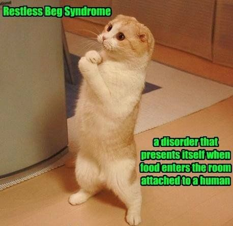 I diagnosed my cat with this