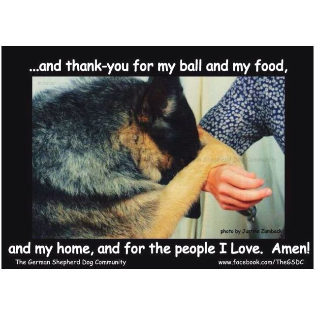 Download the Shocking Funny Thank You Dog Pictures