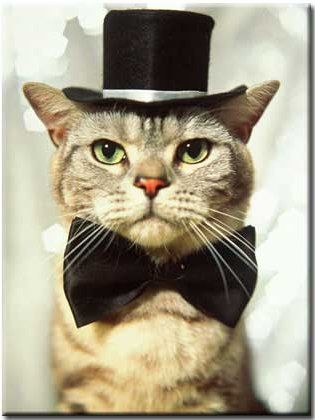 Cat wearing a bow tie and top hat