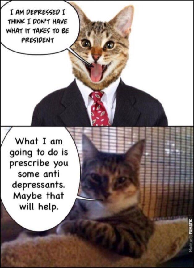 donaldtrump president theusa cats catmemes mentalill…