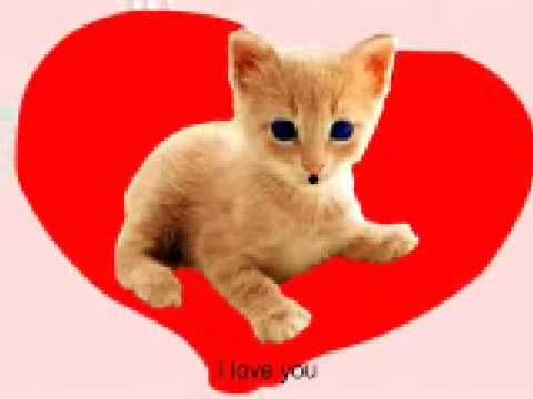 I Love You by The Funny Cat