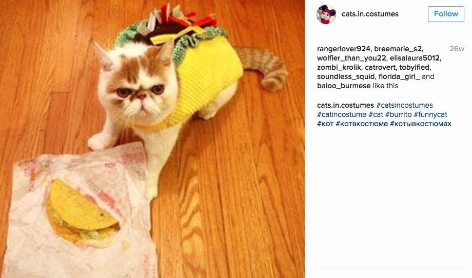 Cat Taco Costume Luxury 10 Instagram Cats In Halloween Costumes Catcon 2018