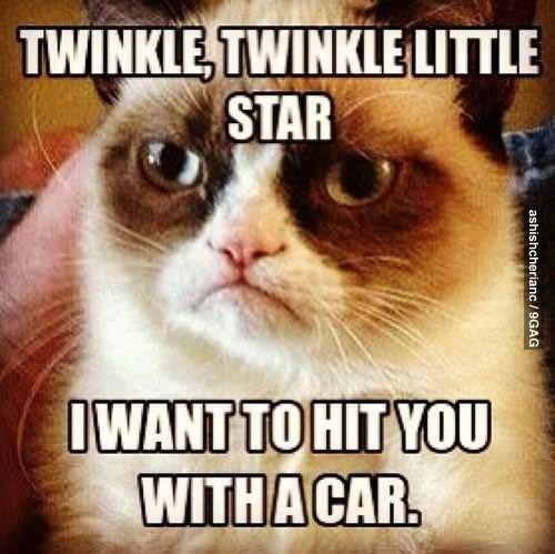 30 Very Funny Grumpy Cat Meme And
