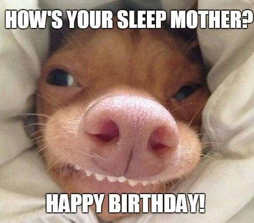 Download the Stunning Funny Happy Birthday Dog Memes