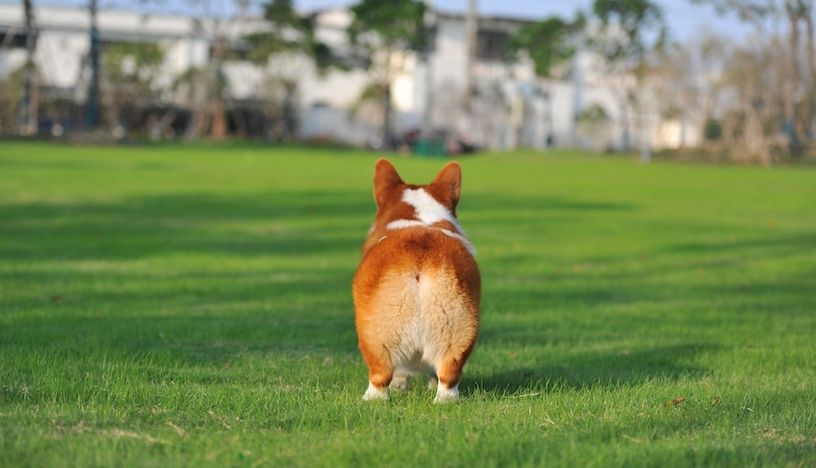 Some pet owners think it s cute or funny when dogs scoot their bottoms across the floor Unfortunately this behavior may be a sign that their pets have