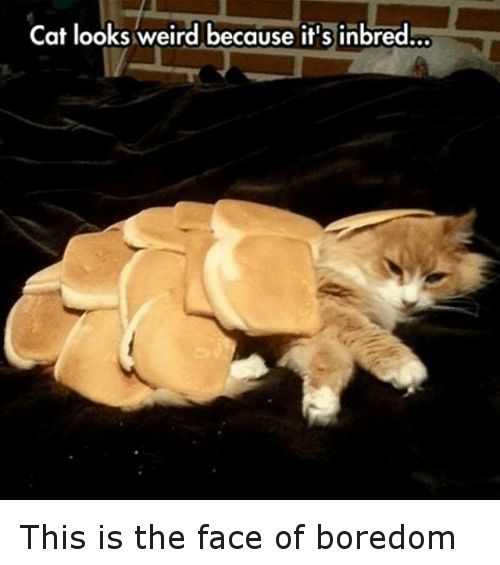 Cats Funny and Weird Cat looks weird because it s inbred
