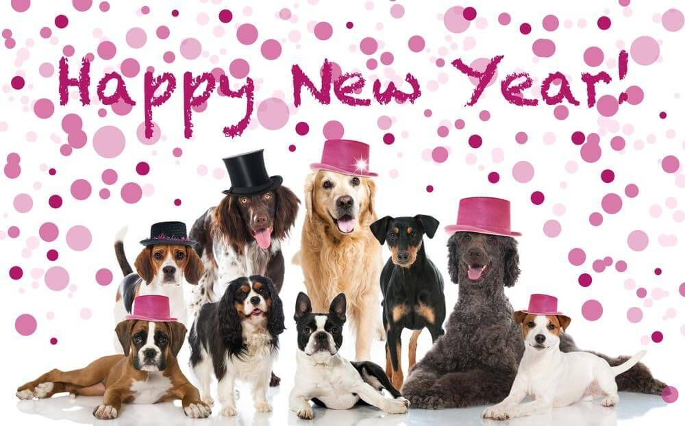 We are celebrating the New Year 20l8 having lots of fun