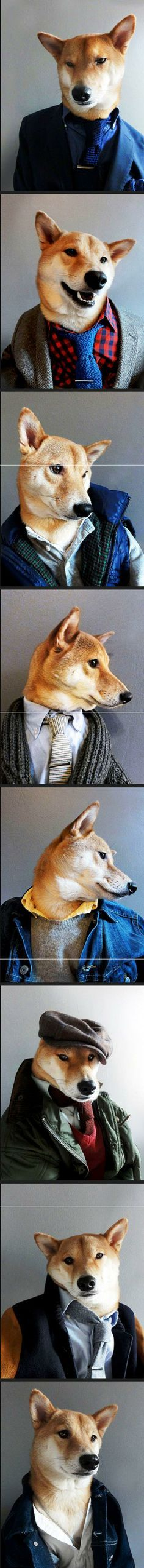 The Men s Fashion Dog Model Funny Dogs Funny Animals Cute Animals Animal Funnies