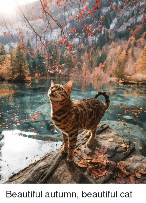 Beautiful Cat and Autumn Beautiful autumn beautiful cat