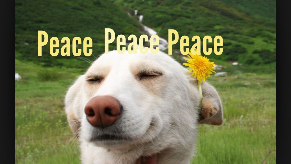 Peace Dog s Dog Funny Animal Reaction