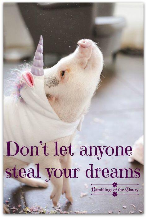Schweine Einhorn Status Quotes Motivational Quotes Funny Quotes Funny Unicorn Quotes Positive