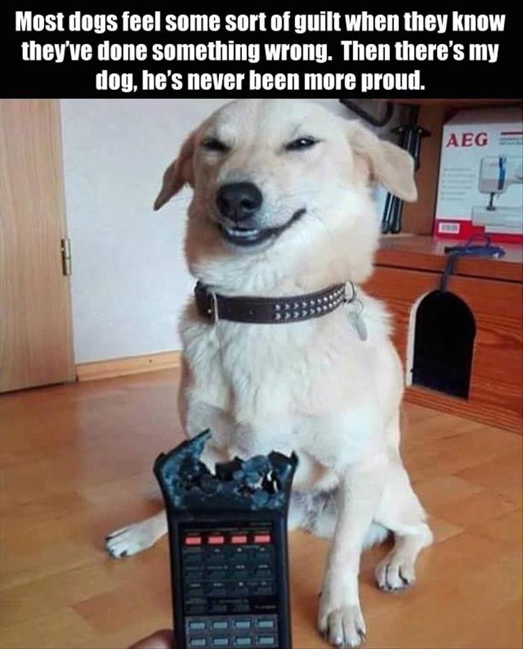 AFV challenges you to Try Not To Laugh at these hilarious funny dog videos clips bloopers and other great moments caught on tape Check out more Funny