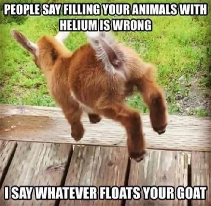 funny animal picdump of the day 286 21 photos humorside
