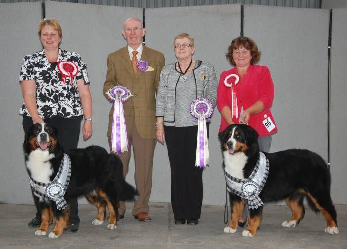 Bernese Mountain Dog Club of Scotland Kelso Weekend 2014 Our 2014 Championship Show was held at Springwood Park Kelso TD5 8LS on Saturday 2nd August 2014