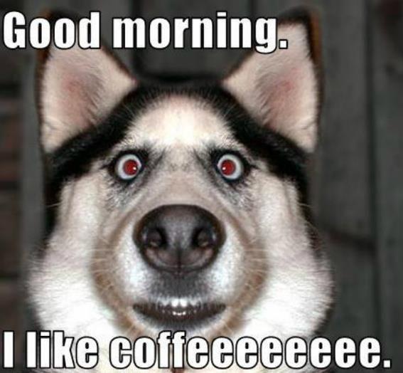 6 Cute Cat Good Morning Meme