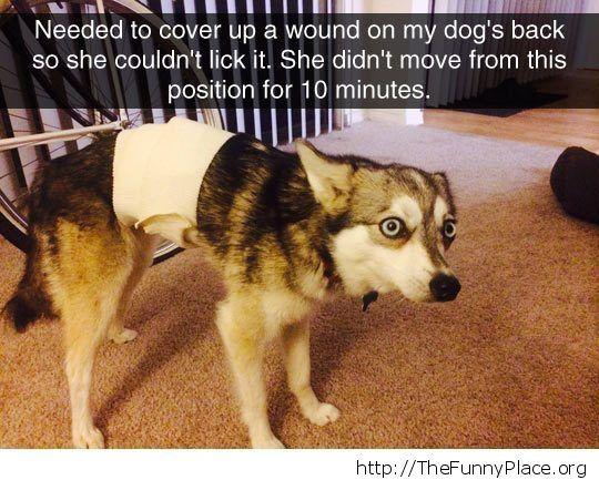 Scared dog face Scared dog face Funny