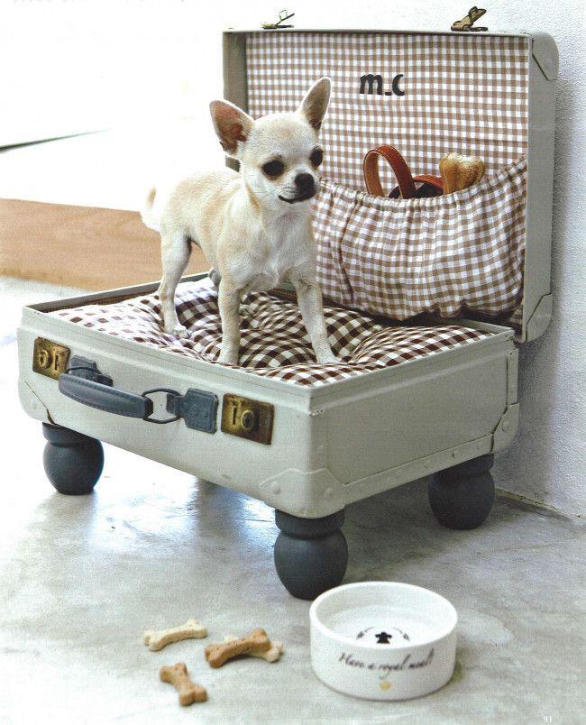 Dog Beds 35 Funny Dogs Pinterest