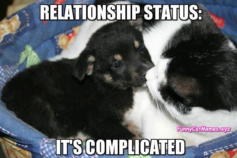 Cats and dogs have a love hate relationship with each other But as this funny cat meme shows there is friendship there too