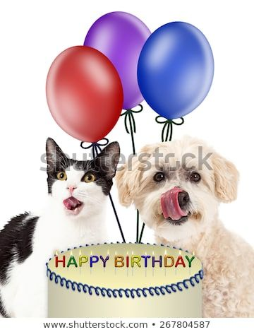 Funny image of a dog and cat licking lips for a birthday cake with balloons in
