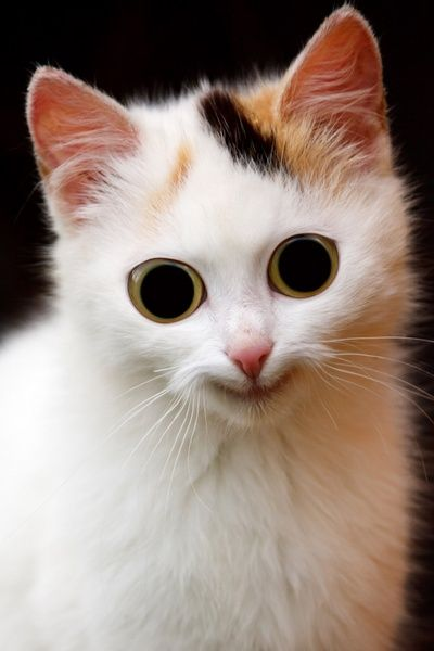 Download the Unique Funny Cat Pictures White Long Nose