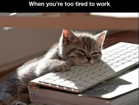 funny cat face tired work