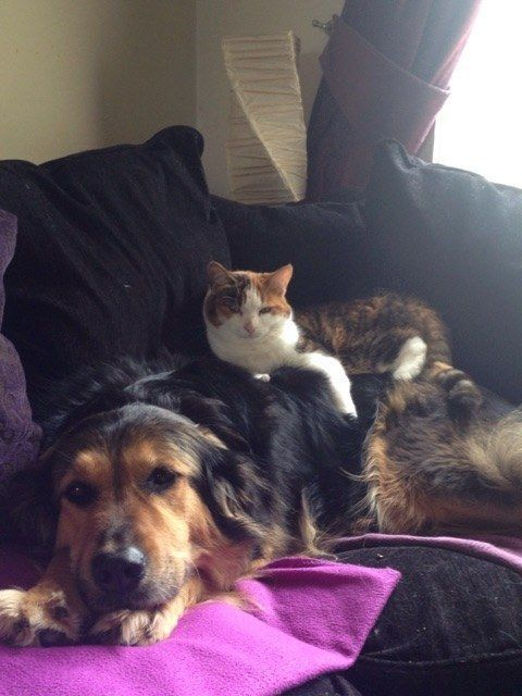 Sometimes you just need to see a cat and dog hangin out to her
