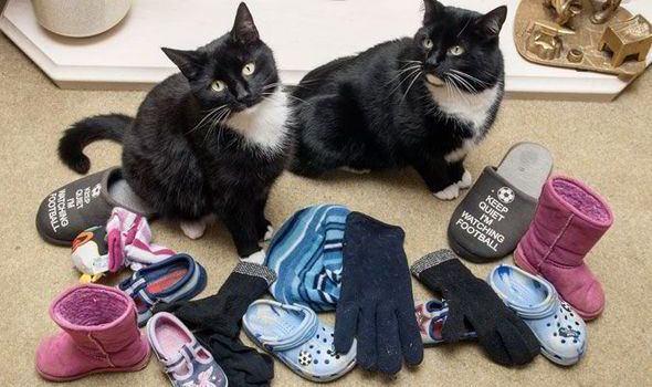 Cats Eric and Ernie with some of the items they have stolen from their neighbours homes
