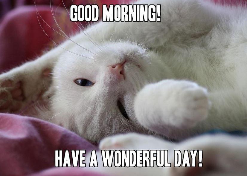 Cute Cat Good Morning Memes for her Meme