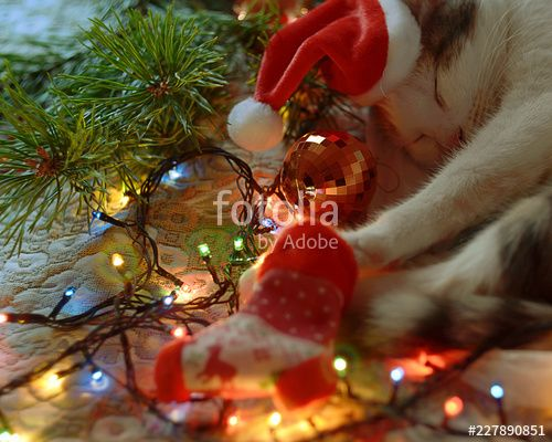 Funny New Year s cat in Santa s red hat sleeps near the Christmas tree ts and garlands during preparation for the Holiday