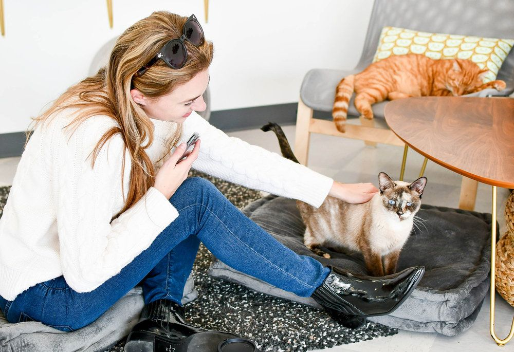 Petting cats inside Tinker s Cat Cafe Salt Lake City Utah — Cotton Cashmere Cat