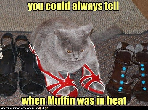 Download the Wonderful Funny Cat Lipstick Pictures