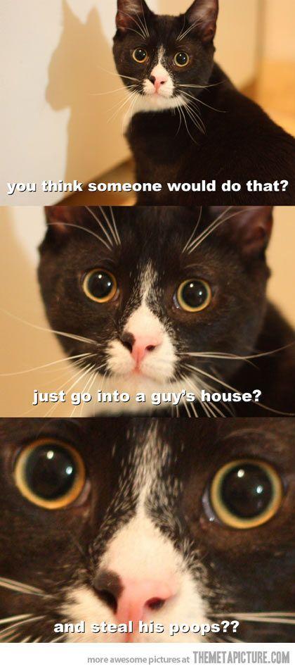 funny cat black white whisker