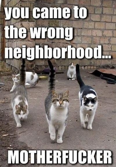 View Cat Funny Pics with Funny sayings Funny Cat Funny Cute Weird Captioned Cat By Funny CatPix Daily Updates of the interwebs best