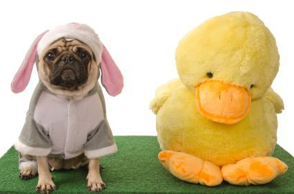 Funny Easter Cat Costumes Dog Days Happy Holidays