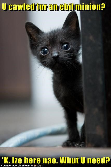 basement cat best of the week called evil for Hall of Fame here kitten minion present