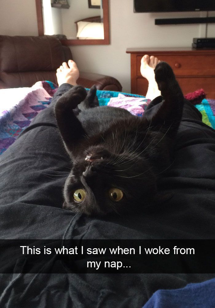 25 Hilarious Cat Snapchats That Will Leave You With The Biggest Smile New Pics CatCute