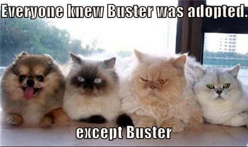 Download the Wonderful Persian Cat Funny Pictures