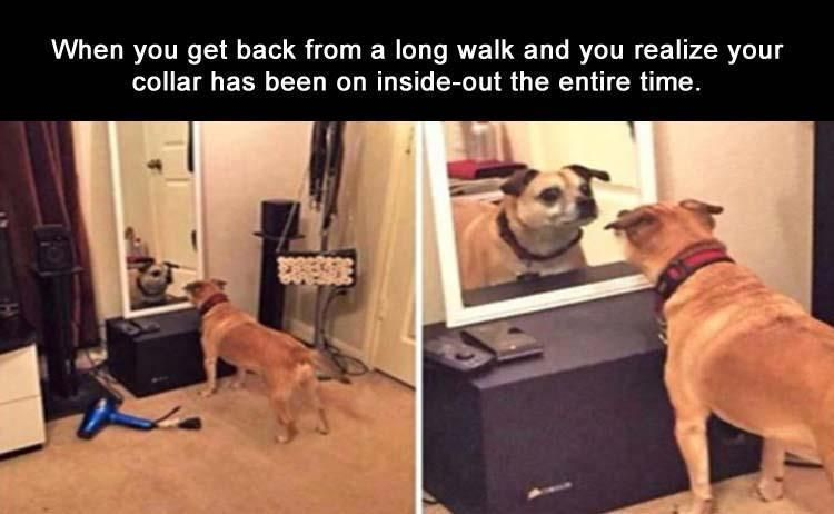 Find the Awesome Dog Pictures with Funny Quotes