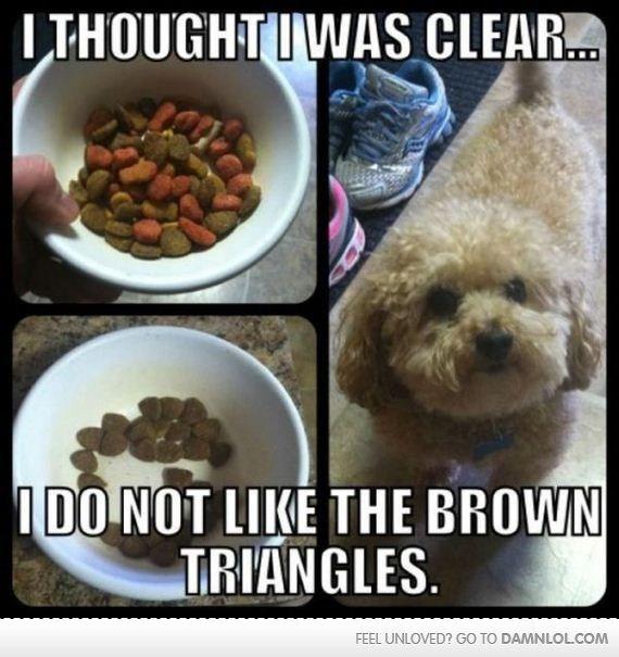 dog refuses to eat
