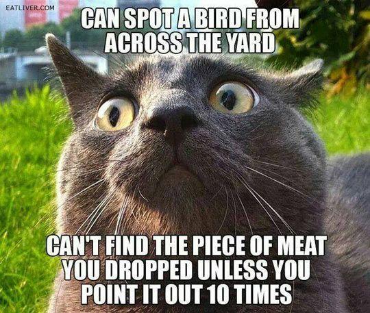 funny cat eyes grey hair