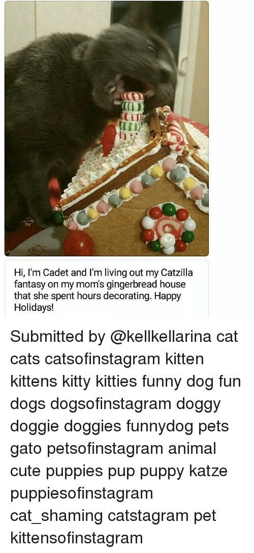 Animal House Quotes Colorful Marvellous 0d Cti Hi I M Cadet and I M Living Out My Catzilla
