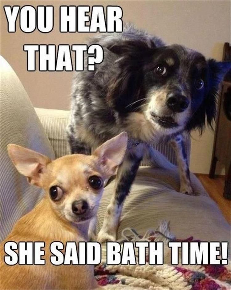 Funny Animal The Day 18 Pics